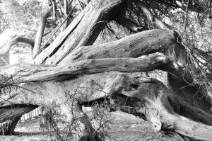w.s.srblack.w.hedgerow