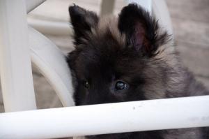 Koda Eyes