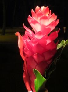 hawaiianredflwr
