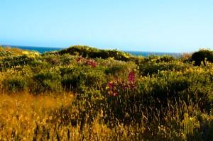 srlupine meadowsm