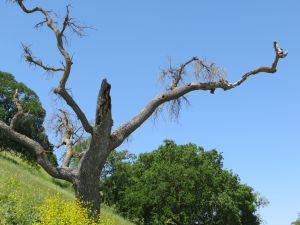 scraggly tree poem