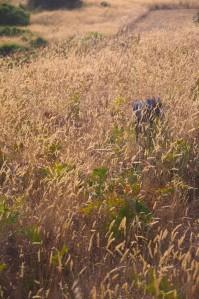 editlongdistancegrass