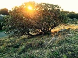 SR tree 1.15