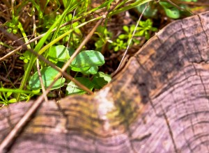 meadow stump-8010 copy