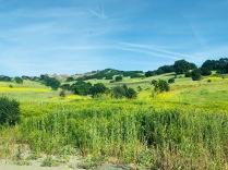 Hills behind park 2