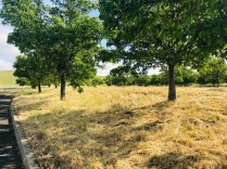 Trees & grass 2